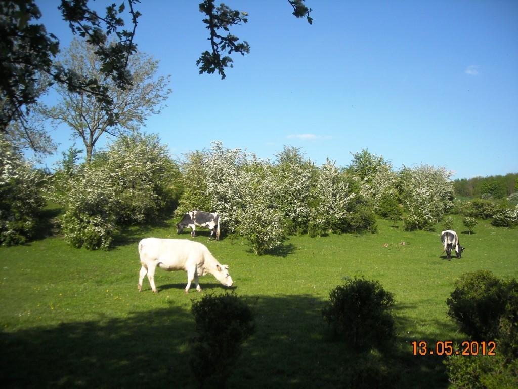 Famars-Chemin-de-Saméon-Boucle-Artrésienne-5
